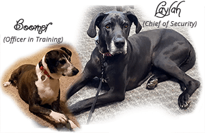 AGA's Newest Security Members | Family  Dogs Boomer (Officer in Training) and Laylah (Chief of Security)